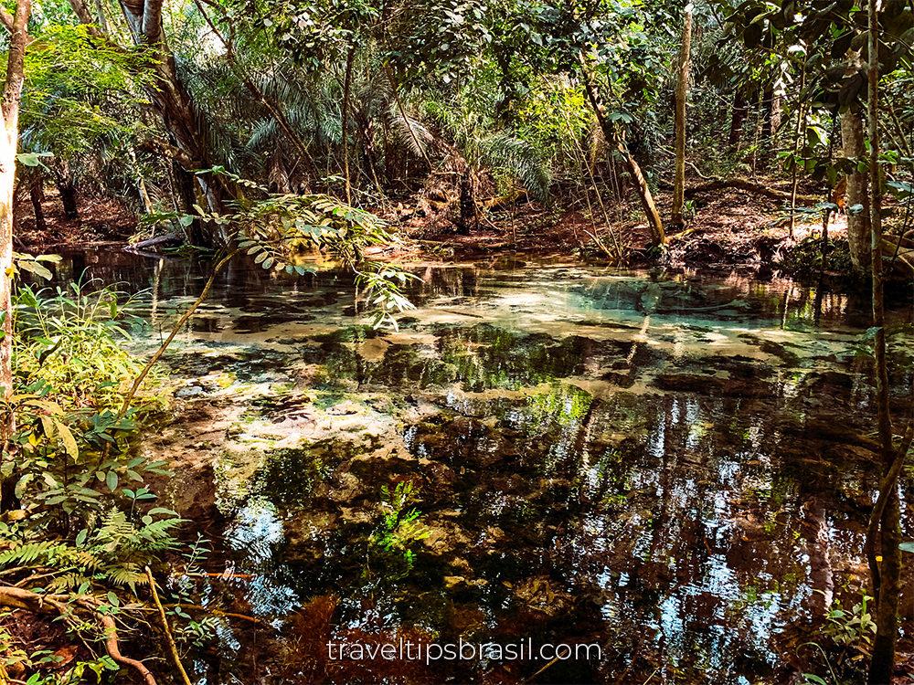 Nascente-aquario-natural